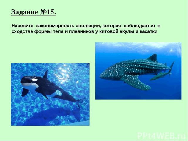 Задание №15. Назовите закономерность эволюции, которая наблюдается в сходстве формы тела и плавников у китовой акулы и касатки