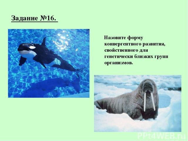 Задание №16. Назовите форму конвергентного развития, свойственного для генетически близких групп организмов.