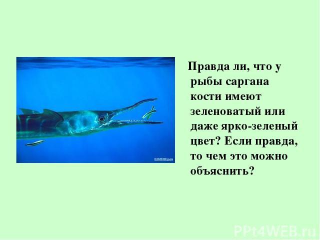 Правда ли, что у рыбы саргана кости имеют зеленоватый или даже ярко-зеленый цвет? Если правда, то чем это можно объяснить?