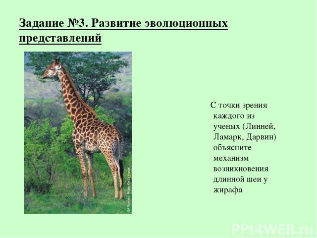 Задание №3. Развитие эволюционных представлений С точки зрения каждого из ученых (Линней, Ламарк, Дарвин) объясните механизм возникновения длинной шеи у жирафа