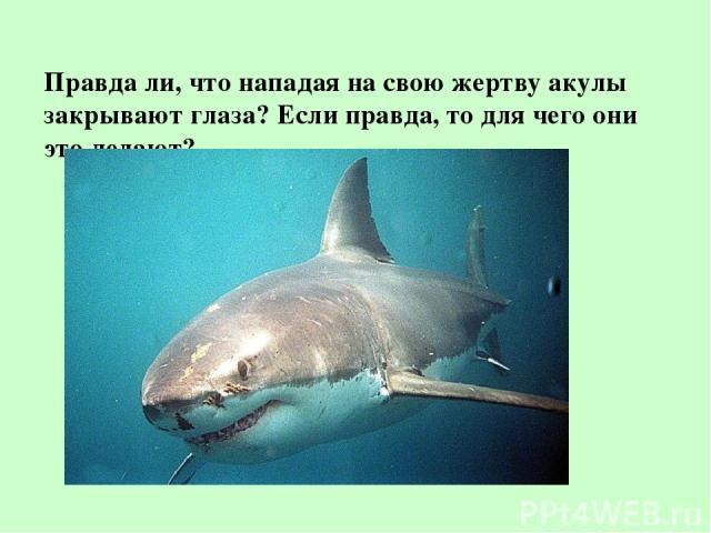 Правда ли, что нападая на свою жертву акулы закрывают глаза? Если правда, то для чего они это делают?
