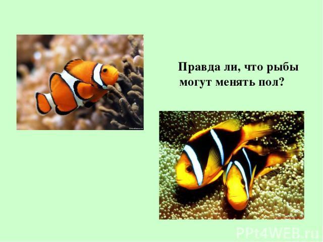Правда ли, что рыбы могут менять пол?
