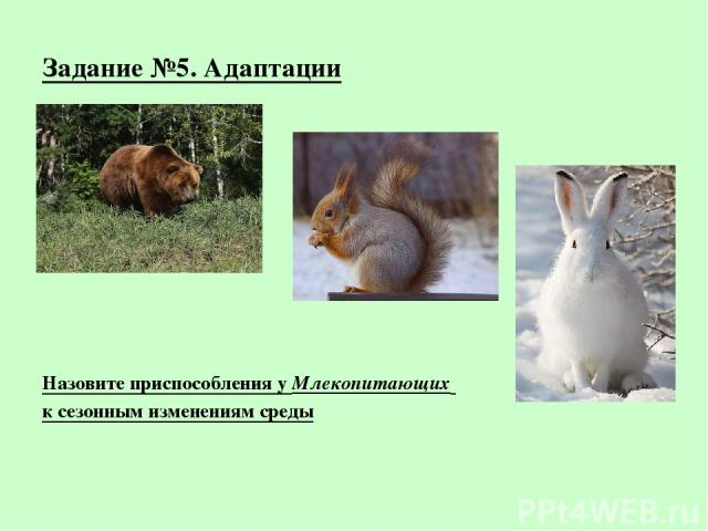 Задание №5. Адаптации Назовите приспособления у Млекопитающих к сезонным изменениям среды