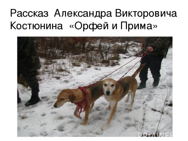 Рассказ Александра Викторовича Костюнина «Орфей и Прима»