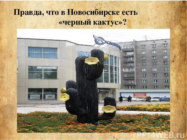 Правда, что в Новосибирске есть «черный кактус»?
