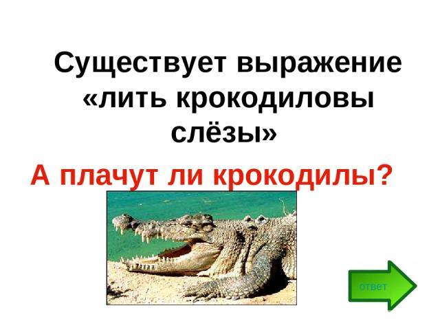 Существует выражение «лить крокодиловы слёзы» А плачут ли крокодилы? ответ