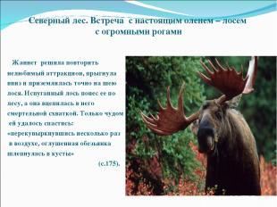 Северный лес. Встреча с настоящим оленем – лосем с огромными рогами Жаннет решил