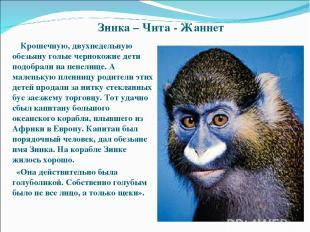 Зинка – Чита - Жаннет Крошечную, двухнедельную обезьяну голые чернокожие дети по