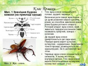 Клас Комахи Мал. 1 Зовнішня будова комахи (на прикладі хруща) Тіло жука-оленя ск