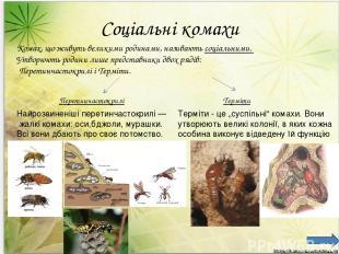 Соціальні комахи Комах, що живуть великими родинами, називають соціальними. Утво