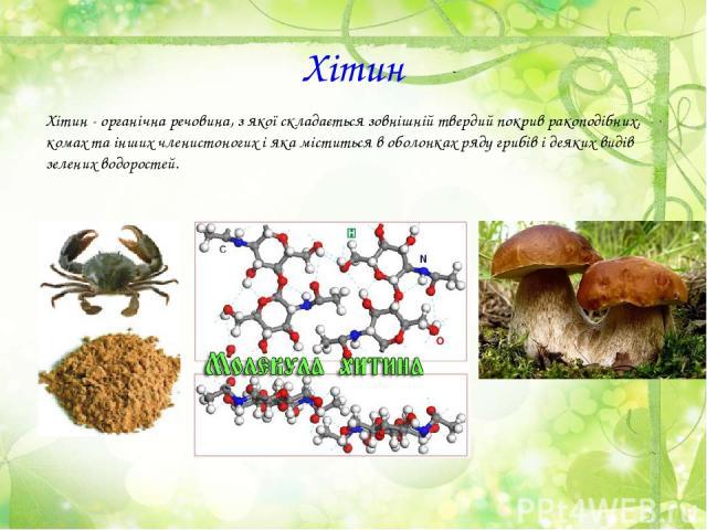 Хітин Хітин - органічна речовина, з якої складається зовнішній твердий покрив ракоподібних, комах та інших членистоногих і яка міститься в оболонках ряду грибів і деяких видів зелених водоростей.