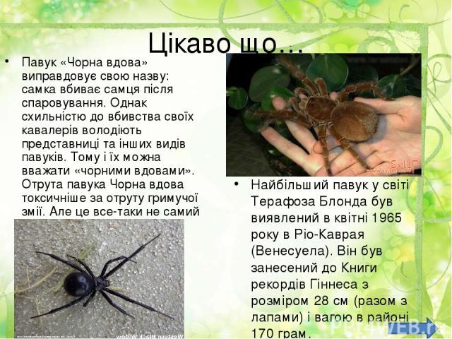 Цікаво що… Павук «Чорна вдова» виправдовує свою назву: самка вбиває самця після спаровування. Однак схильністю до вбивства своїх кавалерів володіють представниці та інших видів павуків. Тому і їх можна вважати «чорними вдовами». Отрута павука Чорна …