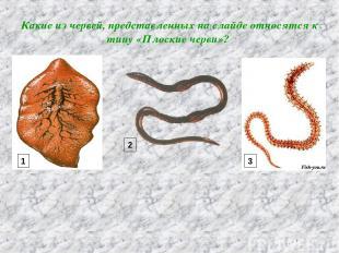 Какие из червей, представленных на слайде относятся к типу «Плоские черви»? 1 2