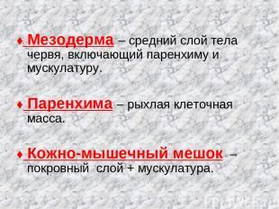 ♦ Мезодерма – средний слой тела червя, включающий паренхиму и мускулатуру. ♦ Пар