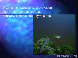 У акул нет плавательного пузыря. Как только они перестают двигаться, медленно ид
