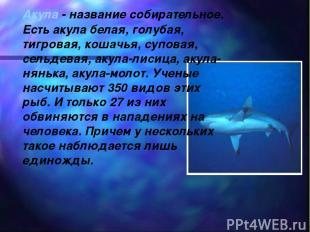 Акула - название собирательное. Есть акула белая, голубая, тигровая, кошачья, су