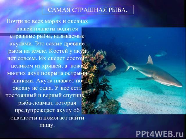 САМАЯ СТРАШНАЯ РЫБА. Почти во всех морях и океанах нашей планеты водятся страшные рыбы, называемые акулами. Это самые древние рыбы на земле. Костей у акул нет совсем. Их скелет состоит целиком из хрящей, а кожа многих акул покрыта острыми шипами. Ак…