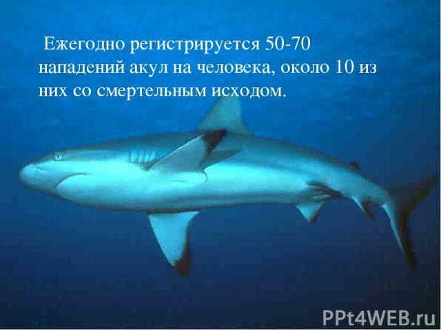 Ежегодно регистрируется 50-70 нападений акул на человека, около 10 из них со смертельным исходом.
