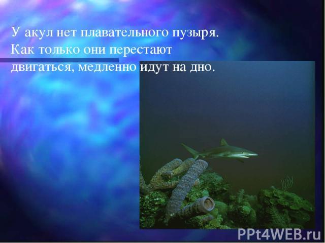 У акул нет плавательного пузыря. Как только они перестают двигаться, медленно идут на дно.