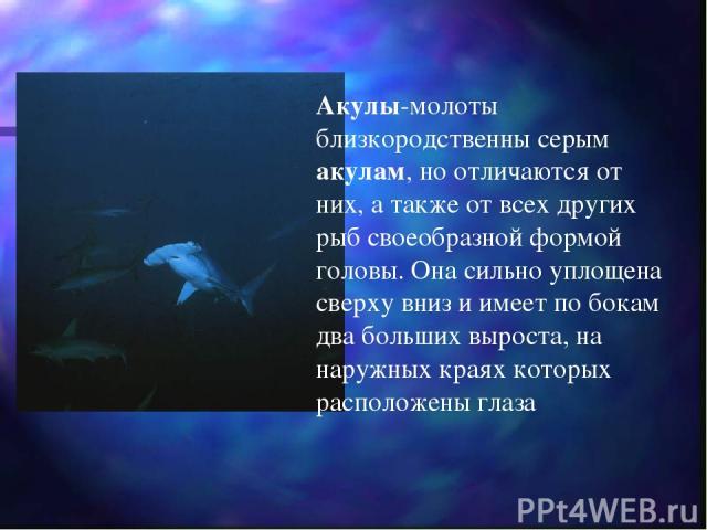Акулы-молоты близкородственны серым акулам, но отличаются от них, а также от всех других рыб своеобразной формой головы. Она сильно уплощена сверху вниз и имеет по бокам два больших выроста, на наружных краях которых расположены глаза