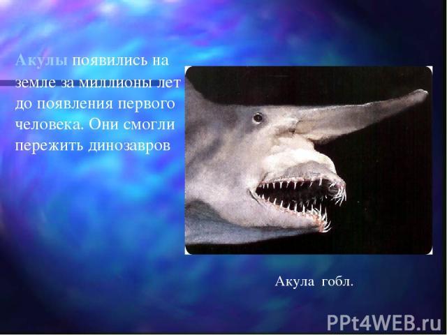 Акулы появились на земле за миллионы лет до появления первого человека. Они смогли пережить динозавров Акула гобл.