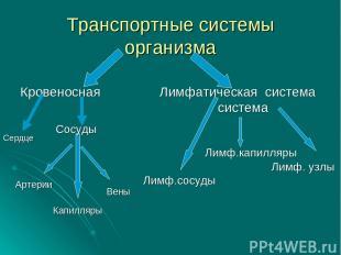 Транспортные системы организма Кровеносная Лимфатическая система система Лимф.ка