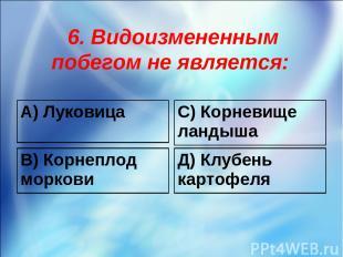 6. Видоизмененным побегом не является: А) Луковица С) Корневище ландыша В) Корне