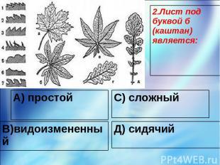 А) простой С) сложный В)видоизмененный Д) сидячий 2.Лист под буквой б (каштан) я