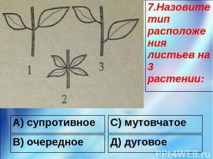А) супротивное С) мутовчатое В) очередное Д) дуговое 7.Назовите тип расположения