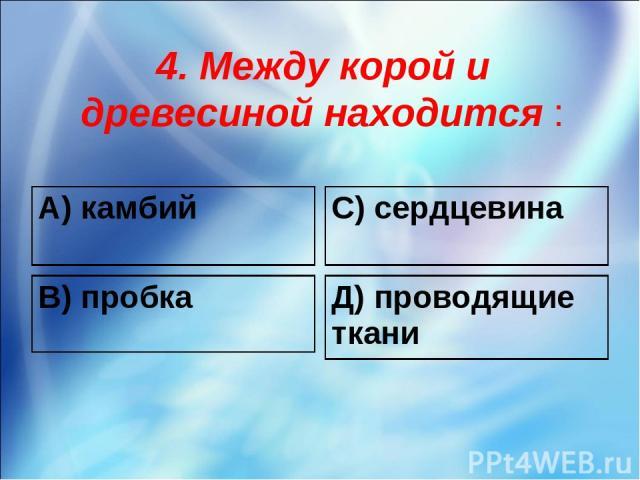 4. Между корой и древесиной находится : А) камбий С) сердцевина В) пробка Д) проводящие ткани