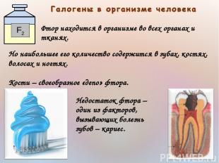 Фтор находится в организме во всех органах и тканях. Но наибольшее его количеств