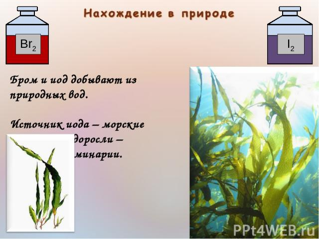 Бром и иод добывают из природных вод. Источник иода – морские водоросли – ламинарии.