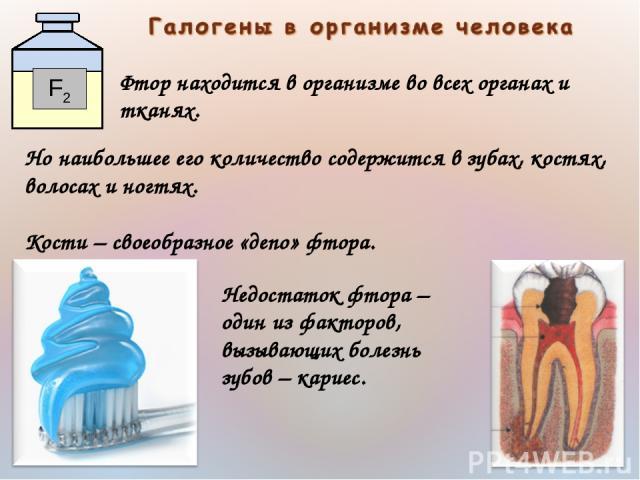 Фтор находится в организме во всех органах и тканях. Но наибольшее его количество содержится в зубах, костях, волосах и ногтях. Кости– своеобразное «депо» фтора. Недостаток фтора– один из факторов, вызывающих болезнь зубов– кариес.