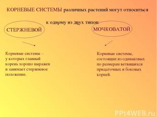 КОРНЕВЫЕ СИСТЕМЫ различных растений могут относиться к одному из двух типов: СТЕ