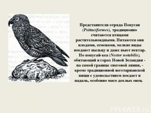 Представители отряда Попугаи (Psittaciformes), традиционно считаются птицами рас