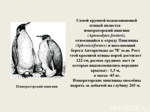 Императорский пингвин Самой крупной водоплавающей птицей является императорский