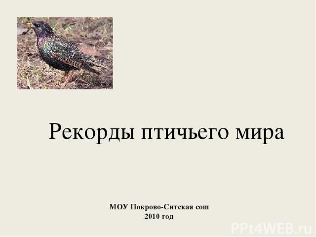 Рекорды птичьего мира МОУ Покрово-Ситская сош 2010 год
