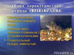 Общая характеристика отряда ОКУНЕОБРАЗНЫЕ Обитают во всех водоемах земного шара.