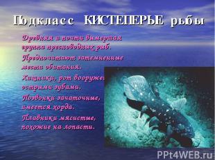 Подкласс КИСТЕПЕРЫЕ рыбы ۷ Древняя и почти вымершая группа пресноводных рыб. ۷ П