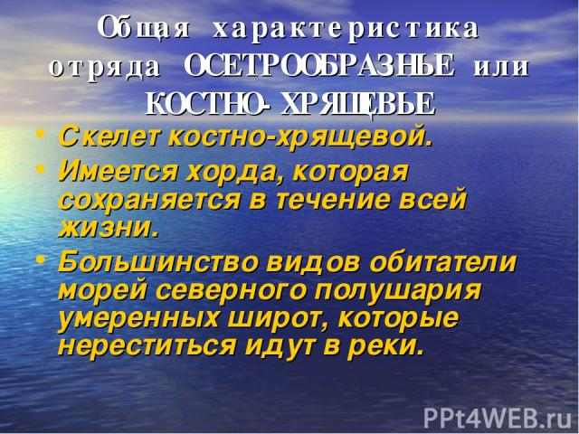 Общая характеристика отряда ОСЕТРООБРАЗНЫЕ или КОСТНО-ХРЯЩЕВЫЕ Скелет костно-хрящевой. Имеется хорда, которая сохраняется в течение всей жизни. Большинство видов обитатели морей северного полушария умеренных широт, которые нереститься идут в реки.