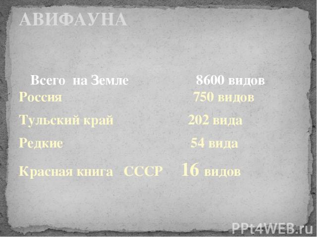 Всего на Земле 8600 видов Россия 750 видов Тульский край 202 вида Редкие 54 вида Красная книга СССР 16 видов АВИФАУНА