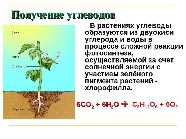 Получение углеводов В растениях углеводы образуются из двуокиси углерода и воды в процессе сложной реакции фотосинтеза, осуществляемой за счет солнечной энергии с участием зелёного пигмента растений - хлорофилла. 6СО2 + 6Н2О С6Н12О6 + 6О2