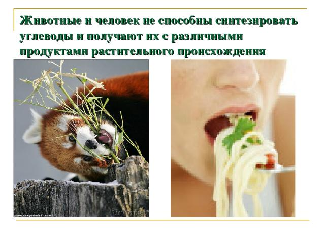 Животные и человек не способны синтезировать углеводы и получают их с различными продуктами растительного происхождения