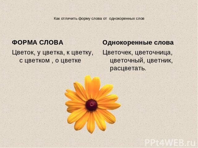 Как отличить форму слова от однокоренных слов ФОРМА СЛОВА Цветок, у цветка, к цветку, с цветком , о цветке Однокоренные слова Цветочек, цветочница, цветочный, цветник, расцветать.