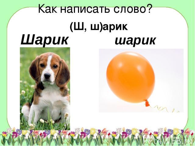 шарик Шарик Как написать слово? (Ш, ш)арик Данные взяты с сайта www.antirak-center.ru
