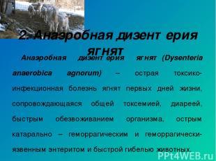 Анаэробная дизентерия ягнят(Dysenteria anaerobica agnorum) – острая токсико-инф