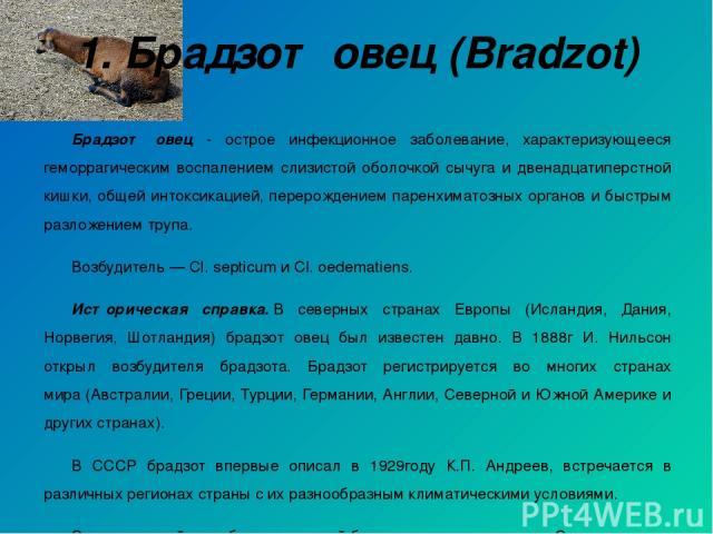1. Брадзот овец (Bradzot) Брадзот овец - острое инфекционное заболевание, характеризующееся геморрагическим воспалением слизистой оболочкой сычуга и двенадцатиперстной кишки, общей интоксикацией, перерождением паренхиматозных органов и быстрым разло…