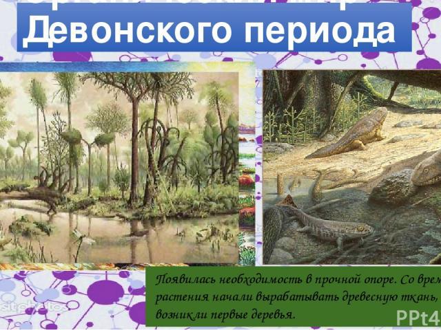 Органический мир Девонского периода Появилась необходимость в прочной опоре. Со временем растения начали вырабатывать древесную ткань, и возникли первые деревья.