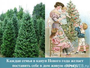 Каждая семья в канун Нового года желает поставить себе в дом живую елочку.
