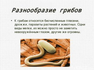 Разнообразие грибов К грибам относятся бесчисленные плесени, дрожжи, паразиты ра